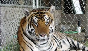 Tiger Enclosure Mesh/Stainless Steel Rope Mesh pictures & photos