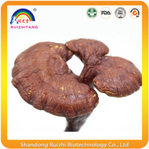 Reishi Mushroom Spore Oil Soft Capsules pictures & photos