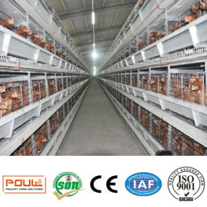 H Tape Automatic Layer Chicken Cage Poultry Equipment pictures & photos