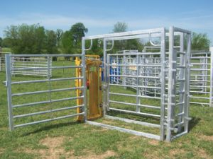 Complete Alley & Sheep System Kits / Yard System pictures & photos