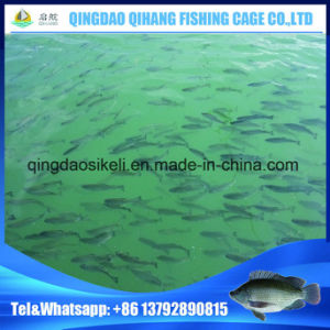 HDPE Seabass Aquaculture Fish Cage Good Selling in China pictures & photos