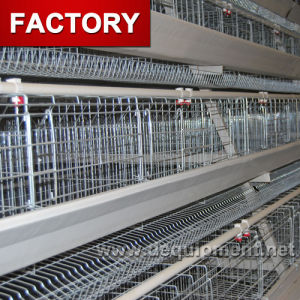 High Quality Low Cost Automatic Poultry Farm Chicken Cage Layer