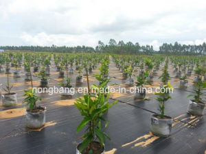 80GSM Black Weed Control Mat pictures & photos