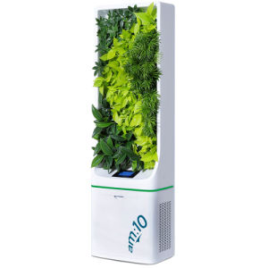 Standing Plant Based Air Purifier To Remove Formaldehyde Benzene And Pm2 5