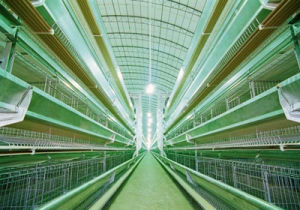 Poultry H-Line Cage