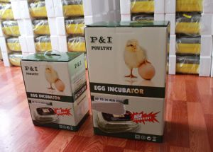 Poultry Incubator pictures & photos