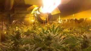 Led Red Blue Full Spectrum Plant Grow