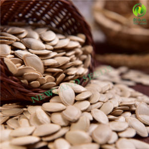 Most Popular and Hot Sale Shine Skin Pumpkin Seeds 10cm-11cm