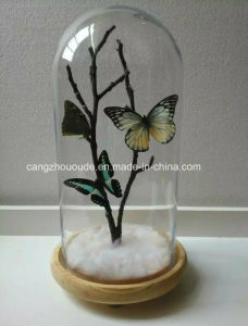 Wholesale Glass Vase with Competitive Price