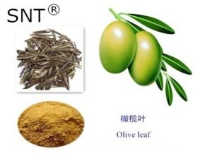 CAS: 32619-42-4 Oleuropien 40% Herbal Extract