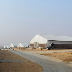 Prefab Steel Chicken House with Environmental Controlled Poultry Equipments pictures & photos