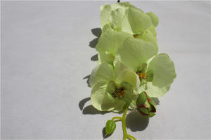 Wholesale Cyan Orchid Silk Artificial Flowers Fake Phalaenopsis pictures & photos
