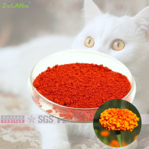 2% 4% Marigold Extract for Cats