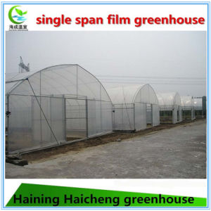 Single Span Greenhouse for Strawberry