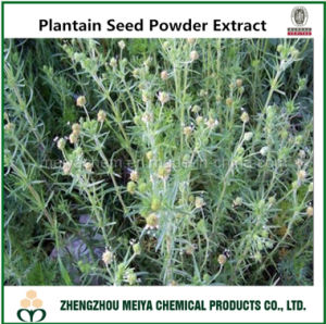 Factory Supply Plantain Seed Powder Extract 10: 1, 20: 1 pictures & photos