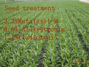 Seed Treatment Fungicide, Metalaxyl-M& Azoxystrobin& Fludioxonil pictures & photos