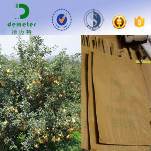 Water Resistant Wax Coated Environmental Food Kraft Paper Bag for Fruit Grow pictures & photos