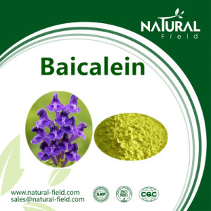 Best Sells Product 98% Baicalein