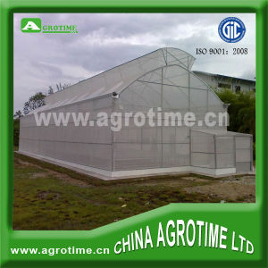 Butterfly Window Greenhouse and Agrioculture Greenhouse for Tomato (CMB4020)