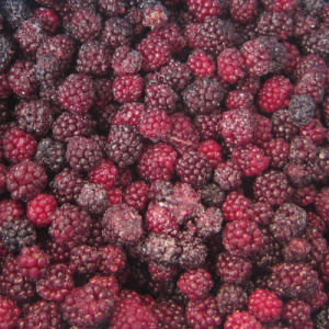 IQF Freezing Organic Blackberry Zl-016