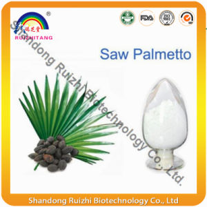 Nature Bulk Saw Palmetto P. E. pictures & photos