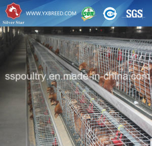 Super Quality Battery Layer Cage for Layer pictures & photos
