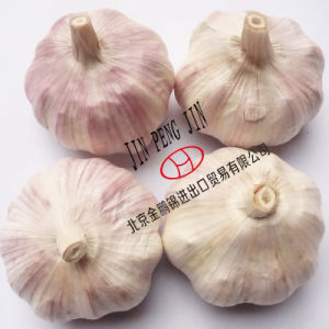 with Gap, HACCP Certificate (4.5cm up) Garlic