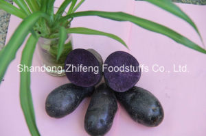 300g Organic Black Potato with Exporting Quality pictures & photos