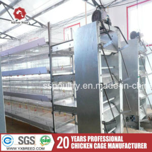 Poultry Farm Machinery for Broilers Chicken pictures & photos