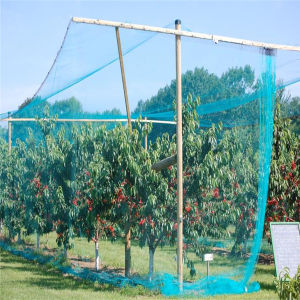 New UV Stabilized Anti Bird Netting in Stock pictures & photos