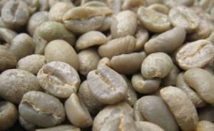 50%Chlorogenic Acid Green Coffee Bean Extract pictures & photos