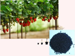 Microbial Seaweed extract base organic NPK fertilizer with amino acid
