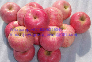 Yantai Origin New Crop FUJI Apple Export Grade