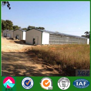 Prefabricated Light Steel Structure Poultry Shed (XGZ-A041)