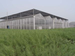 4mm Polycarbonate Garden Greenhouse with UV Protection