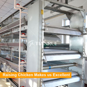 Tianrui Automatic Belt Type Chicken Poultry Manure Removal System pictures & photos