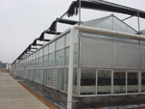 China Commercial Intelligent Multispan Glass Greenhouse-Direct Supply From Factory