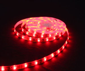 5050 LED Strip pictures & photos
