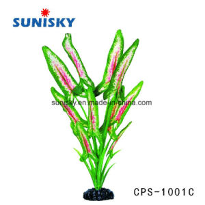 Wholesale Aquarium Plants, Wholesale Aquarium Plants