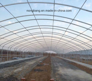 Russia Market Greenhouse with Cheap Price pictures & photos