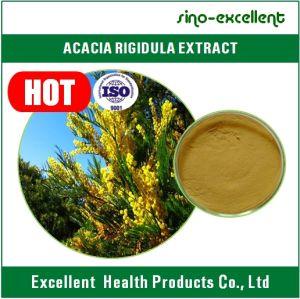 China Hot Selling Acacia Catechu Extract Powder Acacia Rigidula