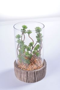 Mini Succulent in Glass Vase Withstand Cement Holder for Gift