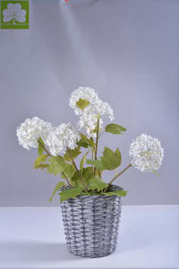 Hydrangea in Rattan Basket for Home Decoration