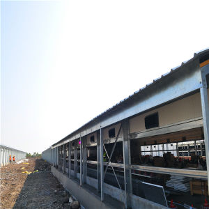 Chicken Farming Equipment and Prefabricated Poultry Shed Supplier From Qingdao, China pictures & photos