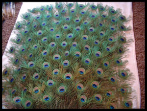 Raw Color Peacock Feathers 20-30cm Garment Accessory