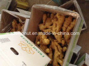 2014 Fresh Ginger (250g) pictures & photos