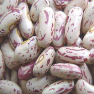 Light Speckled Kidney Bean Long Shape