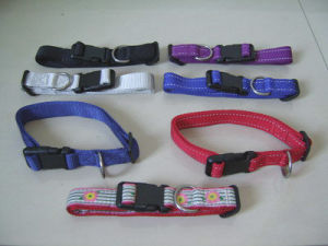 Dog Collar pictures & photos