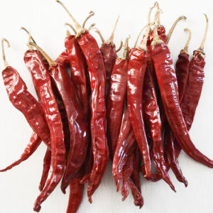 Gute Qualitätsgetrocknete rotglühende Paprikas