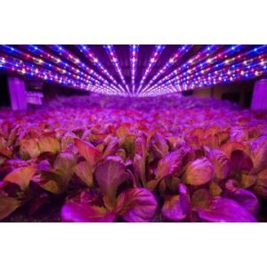 Il giardino dell'interno LED di IP67 LED dell'alta della baia serra impermeabile di potere coltiva l'indicatore luminoso